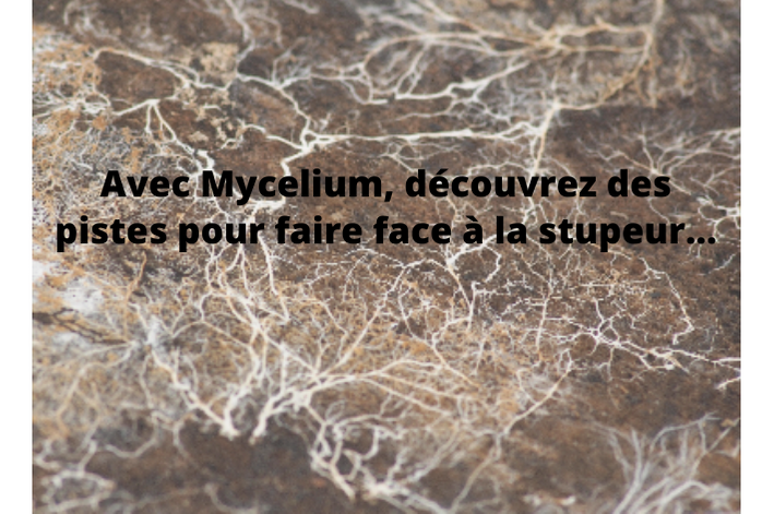 image myclium.png (0.6MB) Lien vers: http://www.mycelium.cc/?wysija-page=1&controller=email&action=view&email_id=24&wysijap=subscriptions&user_id=25